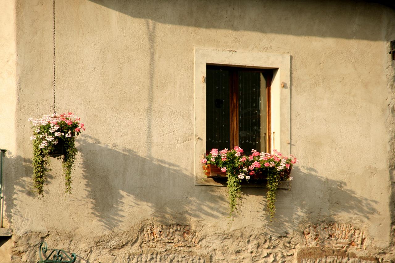 Jeu d'ombres des fleurs dans le soleil couchant.