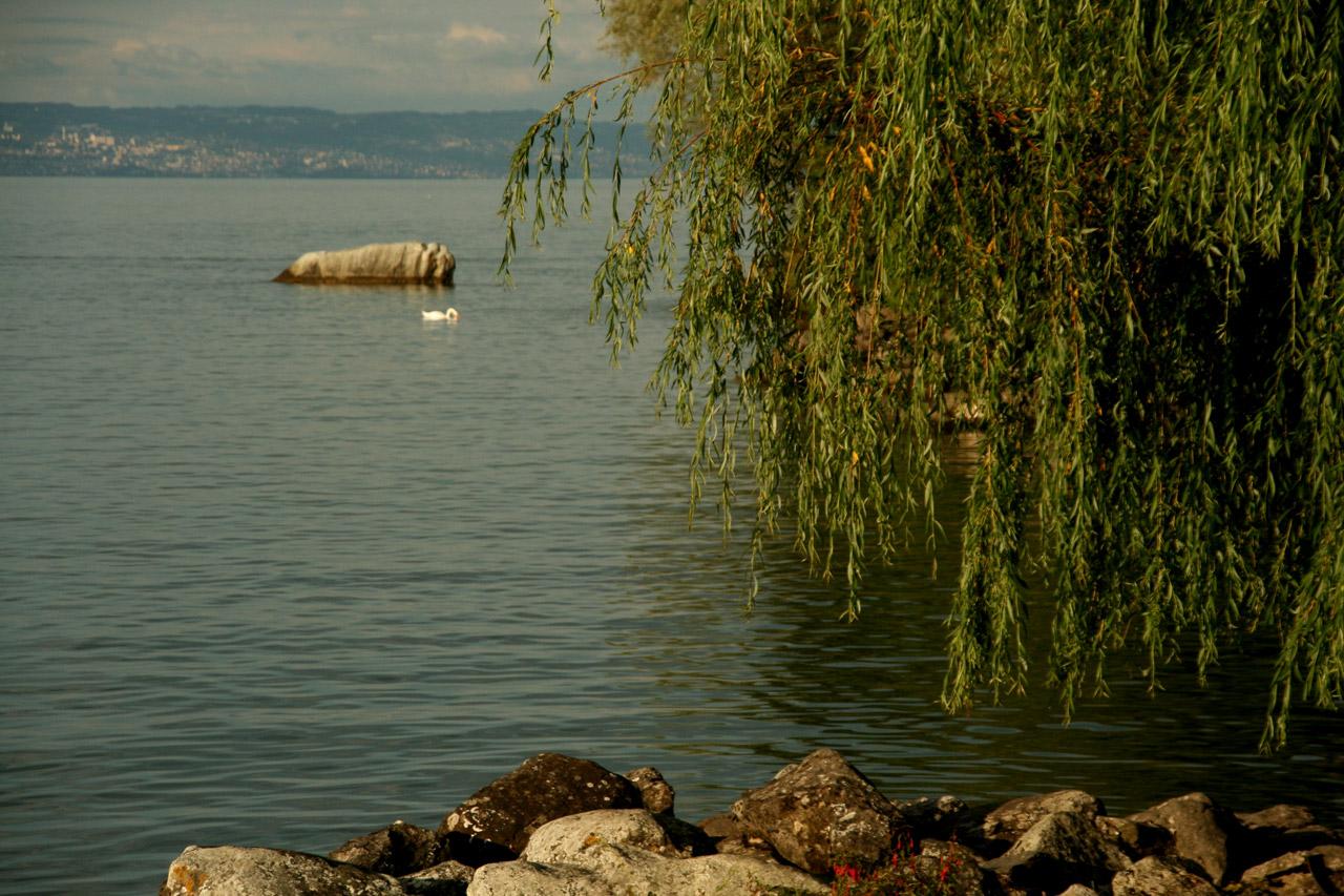 A Yvoire, un cygne nonchalant sur le Lac.