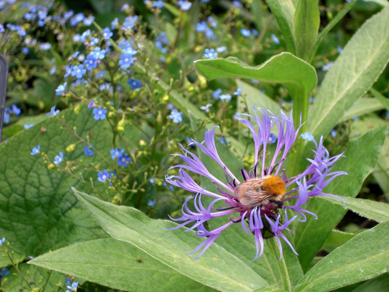 Dans le Jardin des Cinq Sens, un insecte butine une fleur.