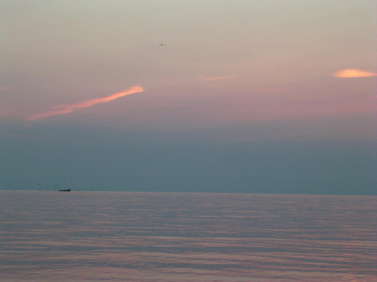 A Yvoire, le pêcheur offre un petit déjeuner bien matinal aux mouettes qui le suivent.