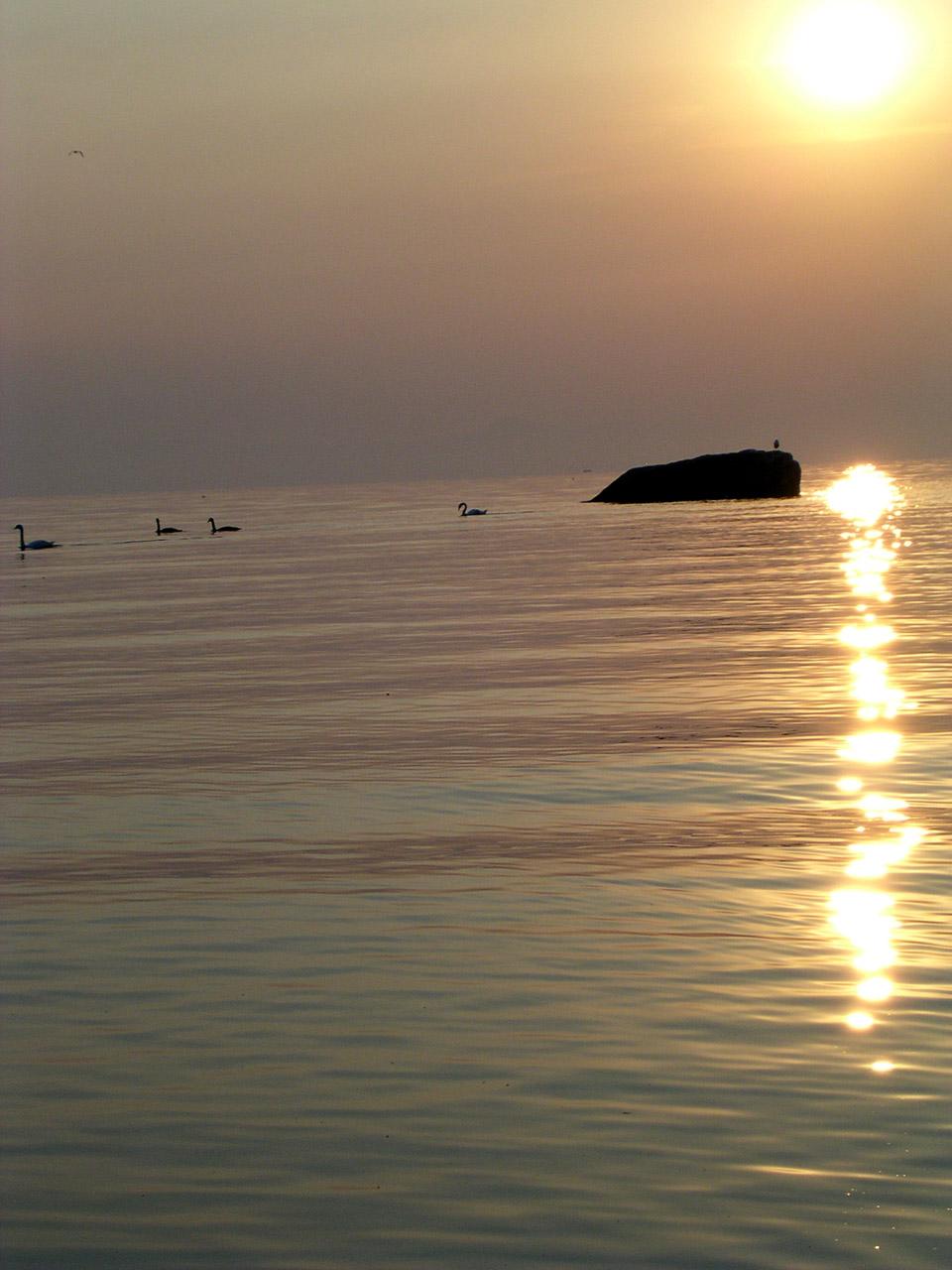 Lever de soleil sur Yvoire. Les cygnes sont déjà en promenade.